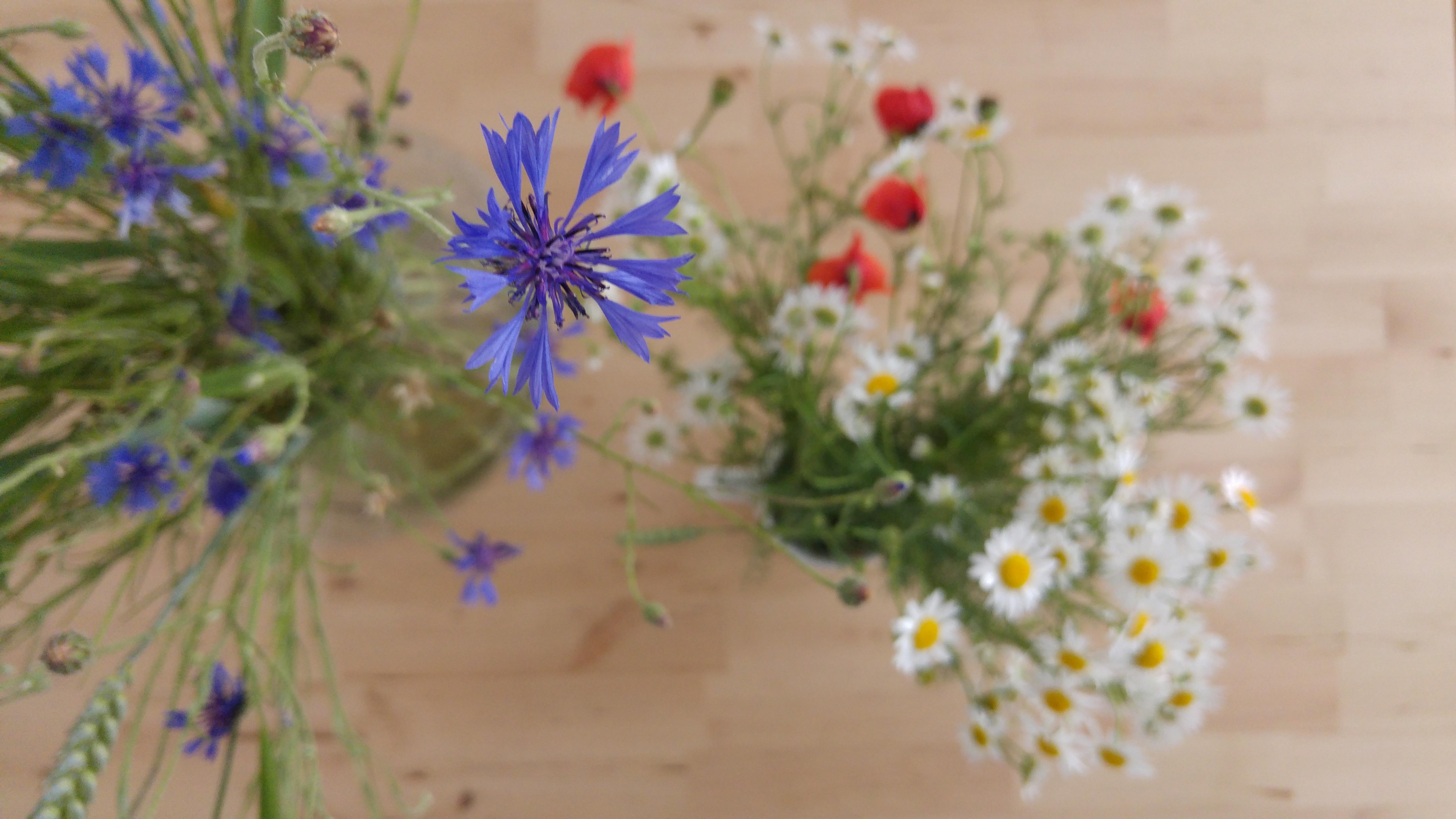 2016 06 09 Kwiaty z Kociewia 0